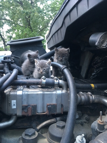 Kittens in a Shred Truck